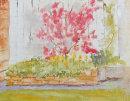 Acer spring