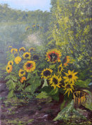 Sunflowers in a garden