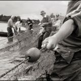 Hauling in the nets 3