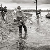 Hauling in the nets 2