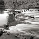 Tree in Boyne River at Donmoe, Co. Meath