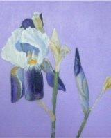 "Iris, acrylic on canvas, 8"" x 8"", 2016"