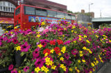 Colourful bedding plants