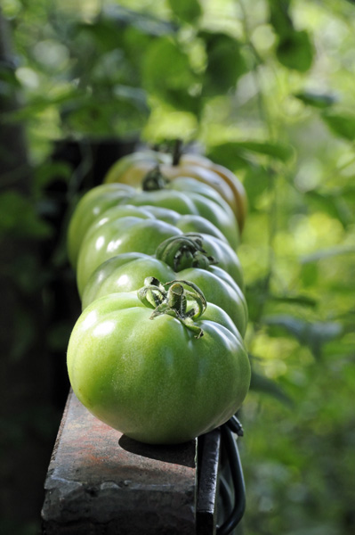 Green Marmande Tomatoes