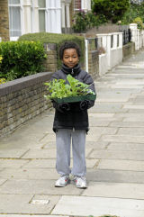 Little boy carrying a tray of plants