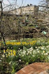 Olden Garden