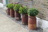 Pelargonium's and Box