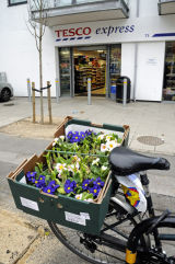 Primula and bicycle