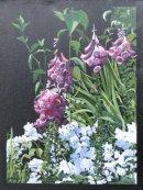 Foxgloves at Sissinghurst : £150