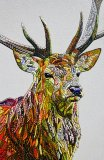Deer Archive