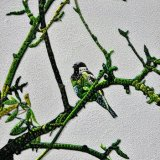 Abstract Bird On Branch (Sculptural)