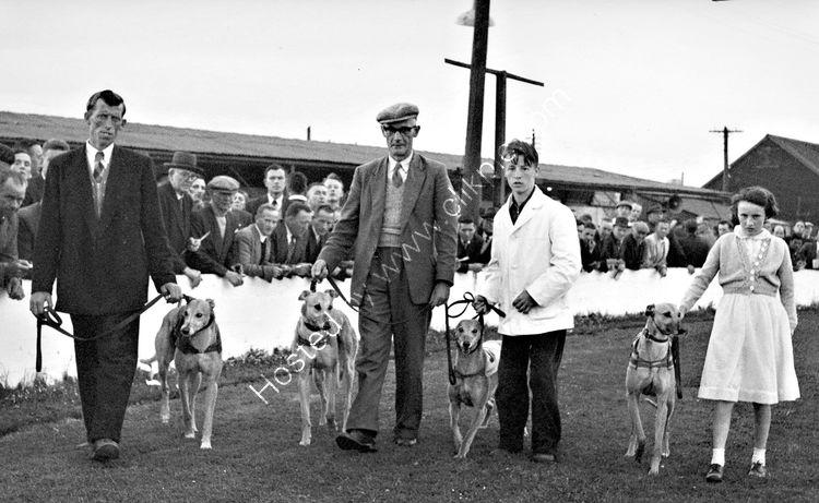 136 Dundalk Greyhound Track