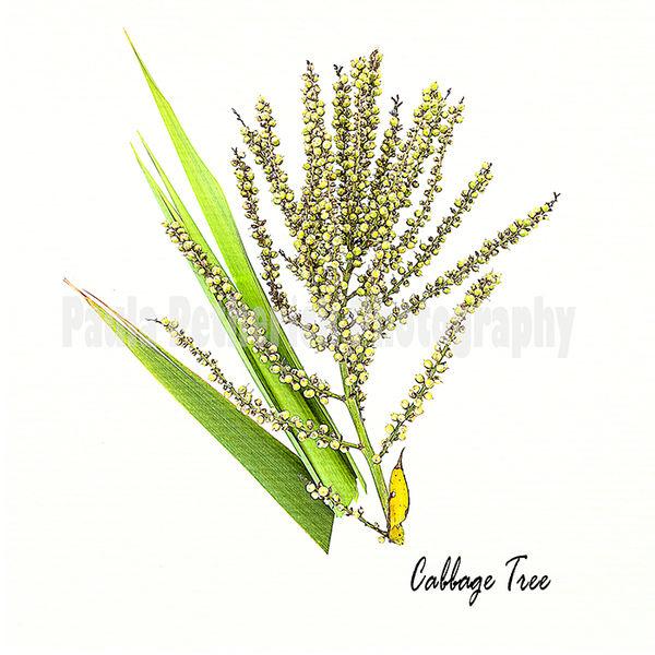 cabbage tree botanical - Laminated vinyl image mounted on 167mmX167mm Bamboo block