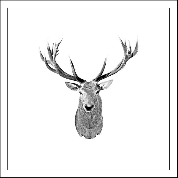 deer Artifact - Laminated vinyl image mounted on 167mmX167mm Bamboo block