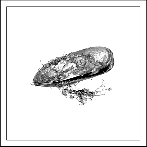 mussel Artifact - Laminated vinyl image mounted on 167mmX167mm Bamboo block