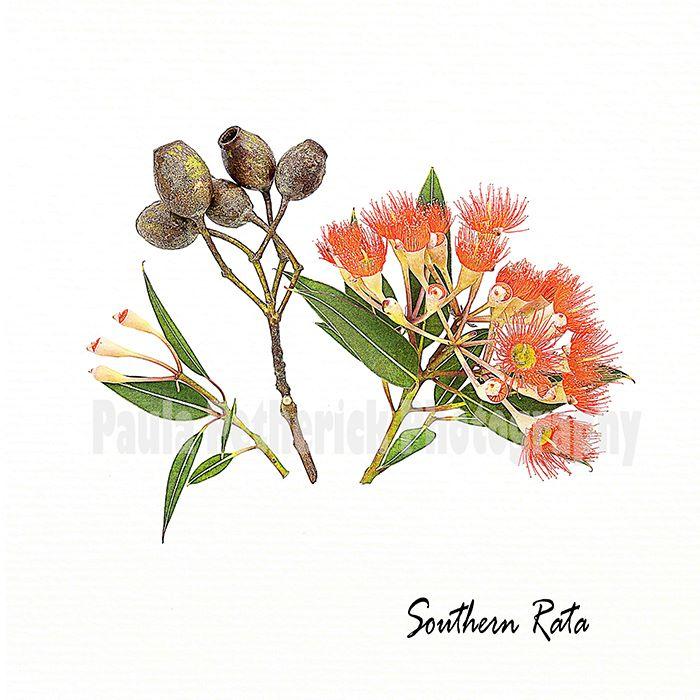southern rata botanical - Giclée Print on Museum Etching Fine Art Paper