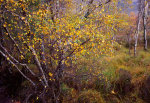 Autumn at Torridon