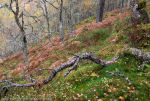 Enchanted Forest, Guisachan Forest, Glen Affric