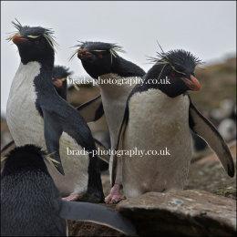 Photobombing penguin style