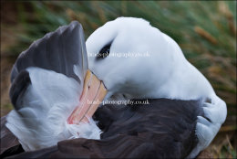Time for a preen