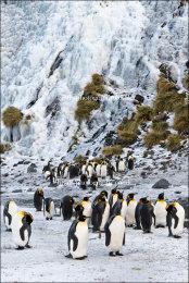 Penguin Falls