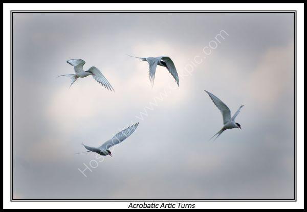 Acrobatic Artic Turns