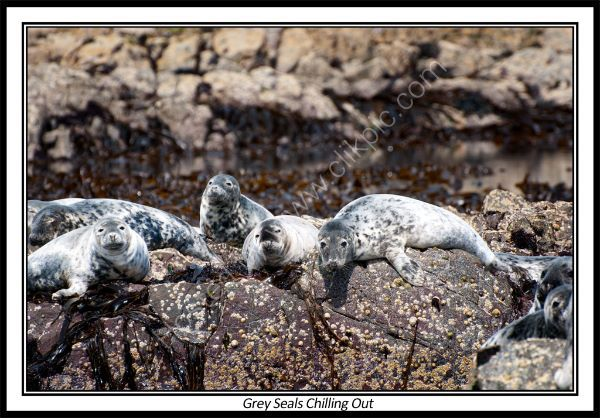 Grey Seals Chilling Out