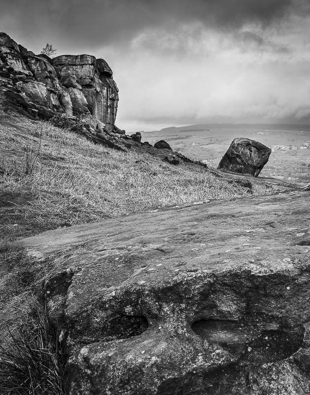 COW AND CALF, ILKLEY MOOR, YORKSHIRE, 2019