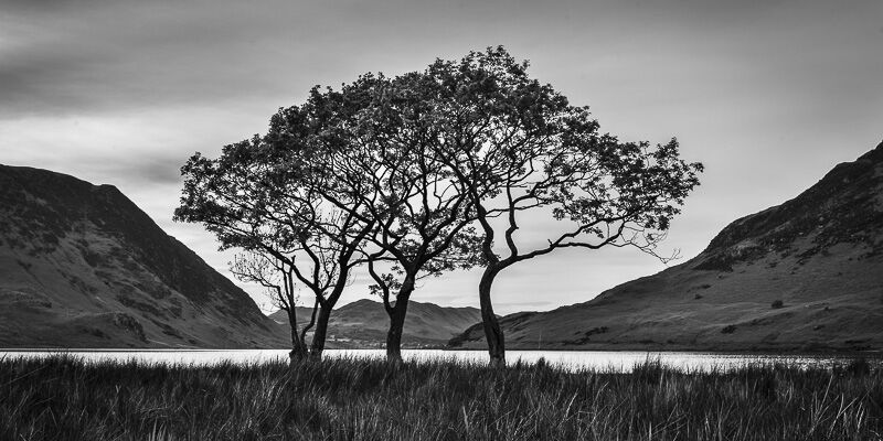 CRUMMOCK WATER TREES, CUMBRIA, 2017