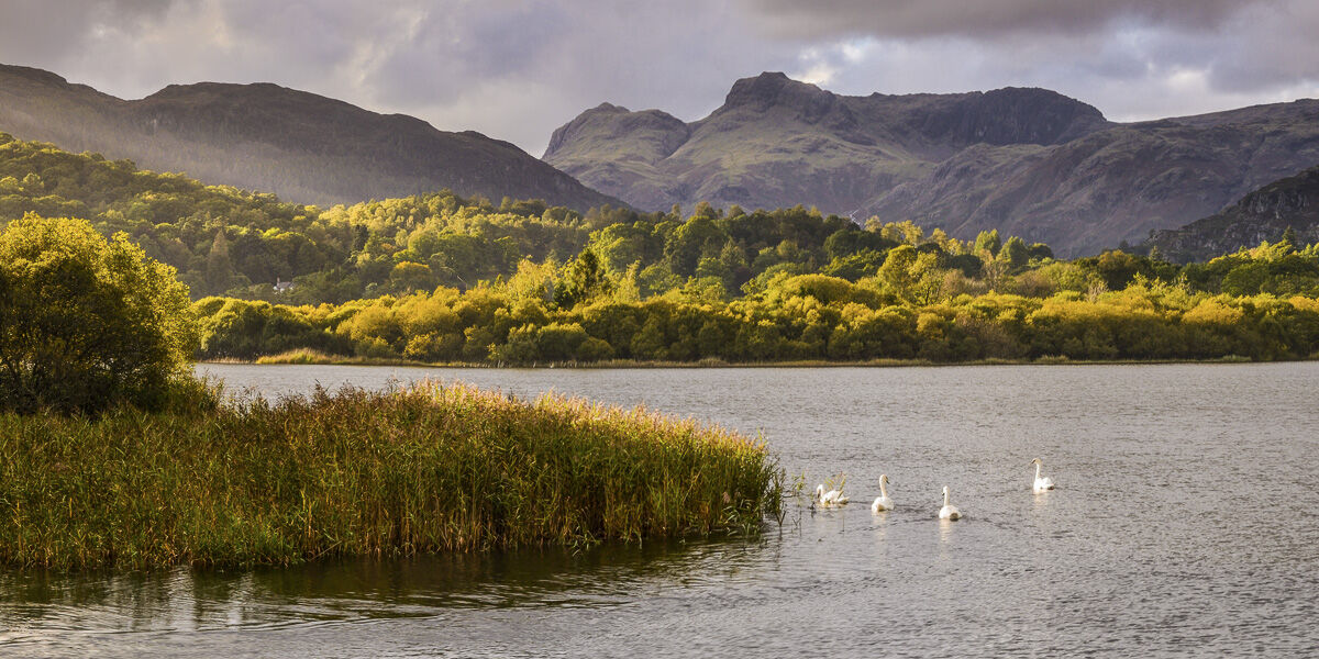 Four Swans, Elterwater, Langdale, 2017