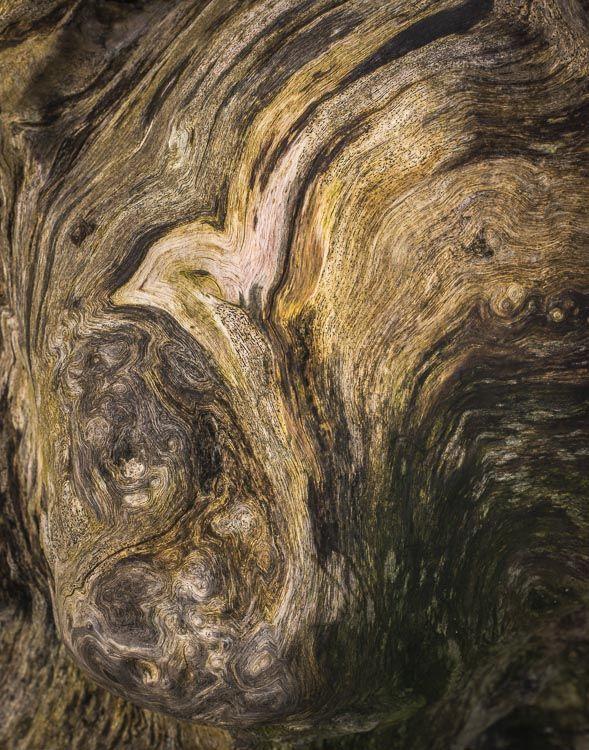 TREE STUMP, WHARFEDALE, YORKSHIRE, 2014