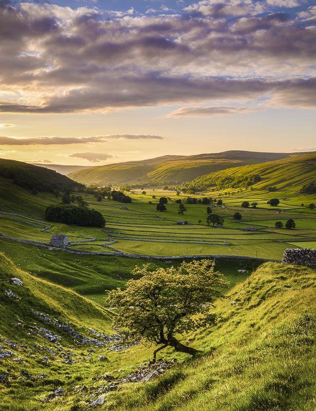 D19 Littondale Evening, Yorkshire Dales
