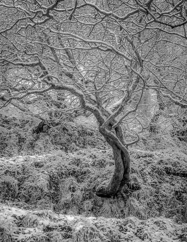 Oxenber Wood, Austwick, Yorkshire Dales, 2017