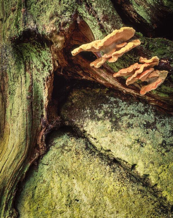Strid Wood, Wharfedale, 1995