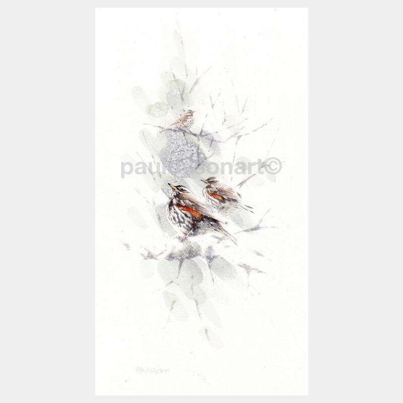 Winter Redwings