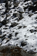 Snow Leopard tracks near Ganja La