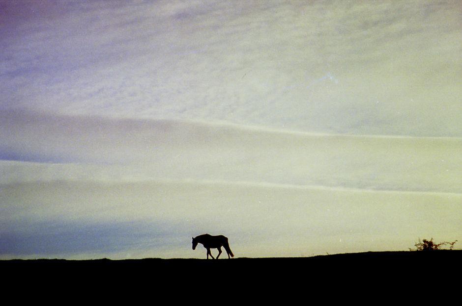 Horse walking: Dunkerton, 1995