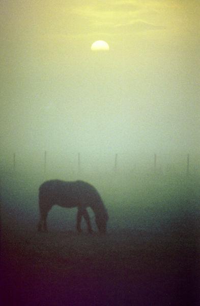 Pony in mist with sunrise: Fosseway, 1996