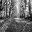 Tree avenue 2.