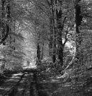 Tree avenue 1.