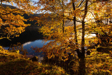 Autumn Woods, Loch Voil