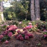 Abbotsbury Subtropical Gardens, Dorset.