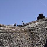Thatch roof, Minehead.