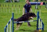 Dog show at Bishops Lydeard