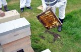 Quantock Beekeepers moving bees
