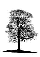 Tree Silhouette No 2