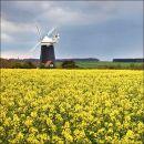 Burnham Overy Staithe Windmill 02