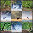 Ashridge Deer No 6