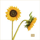 Sunflowers No 2