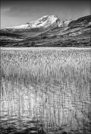 Reeds, Loch Cill Chriosd, Isle of Skye